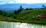 Whispering Palms - Mambukal - Negros Tour